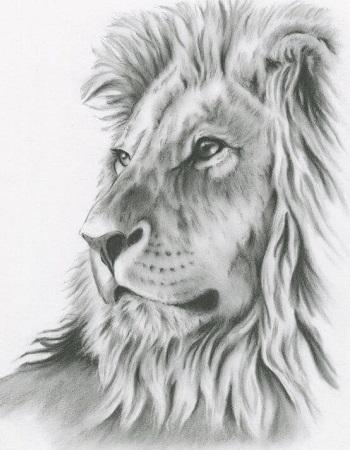Dibujos de leones a lápiz