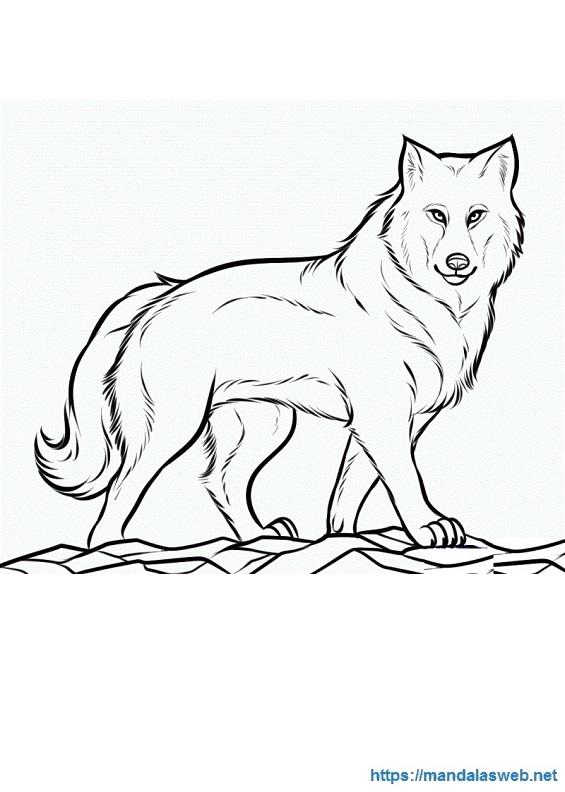 Dibujos De Lobos Wwwasombrosofotoscom