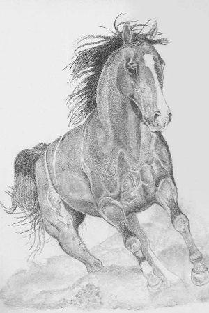 dibujo de caballo a lapiz galopando