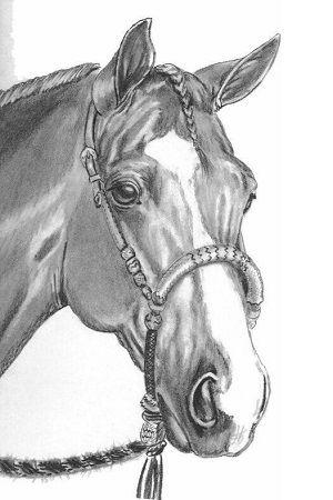 dibujo de caballo a lapiz
