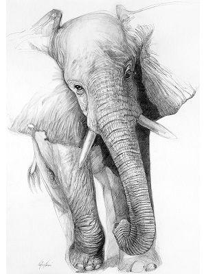 dibujo de elefante a lápiz