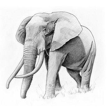 dibujo de elefante a lapiz