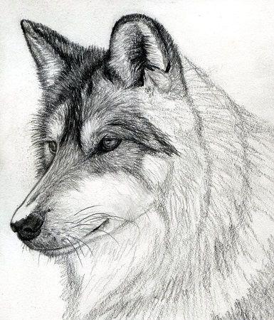 dibujo de lobo solo con lapices