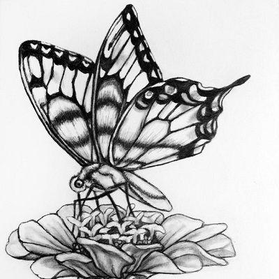 dibujo de mariposa a lápiz