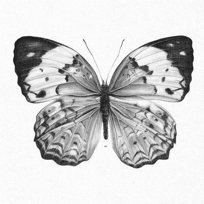 dibujo de mariposa a lapiz