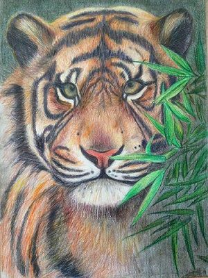 dibujo de tigre a color