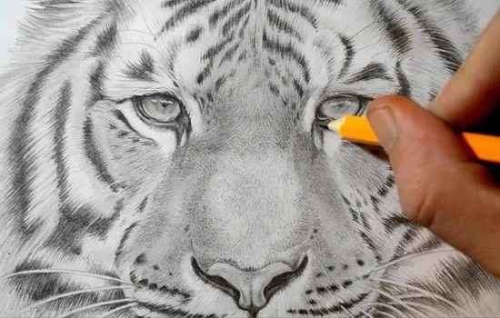 dibujo de tigre a lapiz dificil