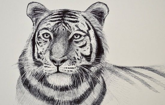dibujo de tigre a lapiz