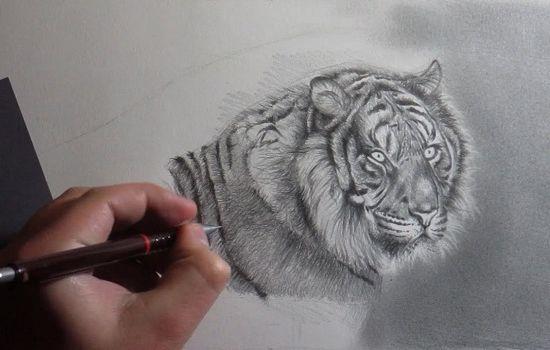 dibujo de un tigre a lápiz
