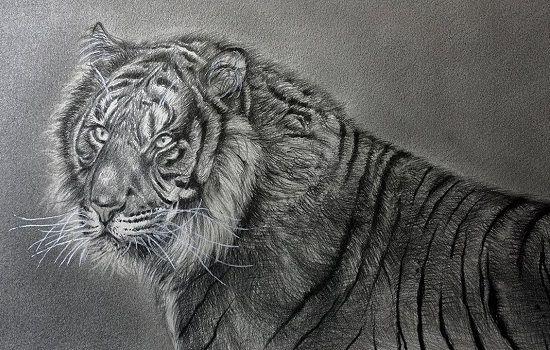 dibujo de un tigre a lapiz