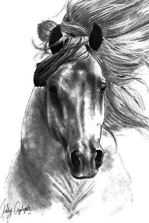 dibujo de una cabeza de caballo a lápiz