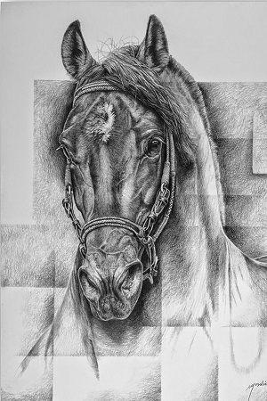 dibujo de una cabeza de caballo a lapiz