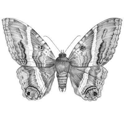 dibujo de una mariposa a lápiz