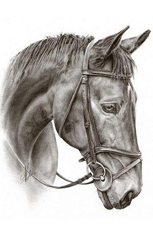 dibujos de caballos a lápiz