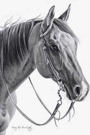 dibujos de caballos a lapiz