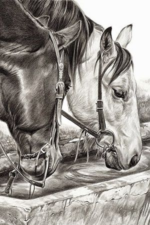 dibujos de dos caballos a lapiz