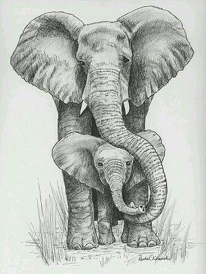 dibujos de elefantes a lapiz