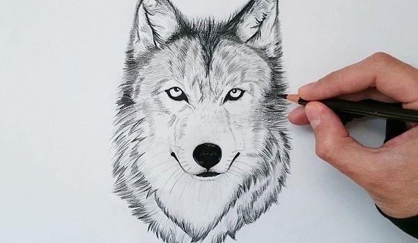 dibujos de lobos a lapiz