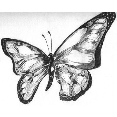 dibujos de mariposas a lápiz