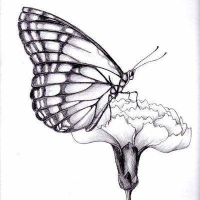 dibujos de mariposas a lapiz