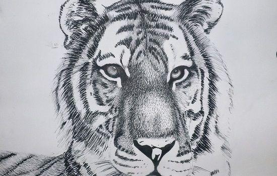 dibujos de tigres a lapiz