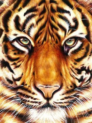 dibujos de tigres coloreados
