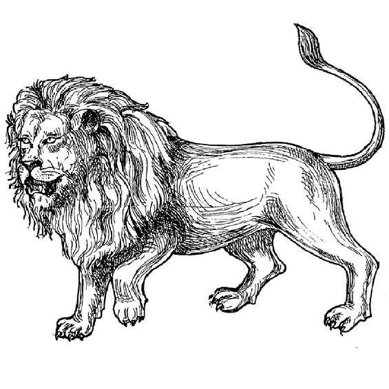 leones mandalas para pintar