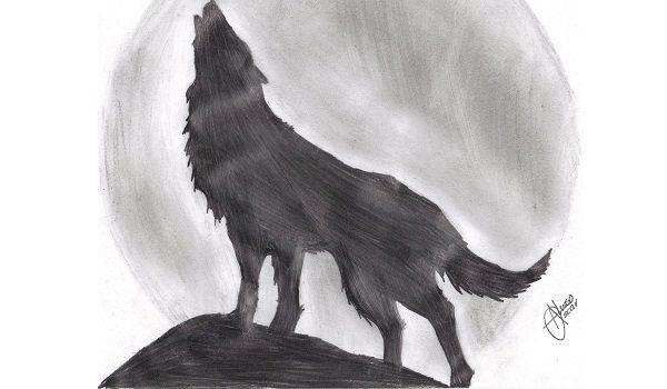 un lobo aullando dibujo a lapiz