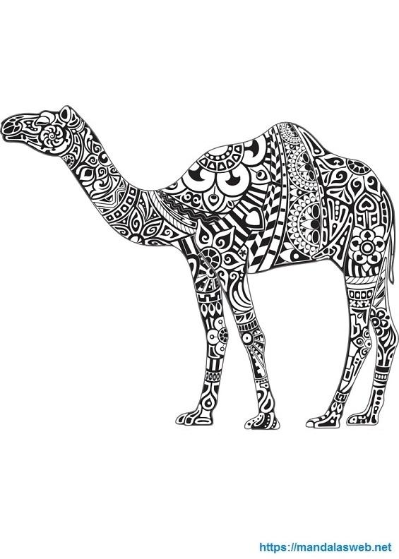 Camello mandala