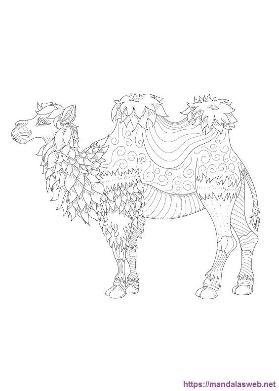 Camellos para colorear
