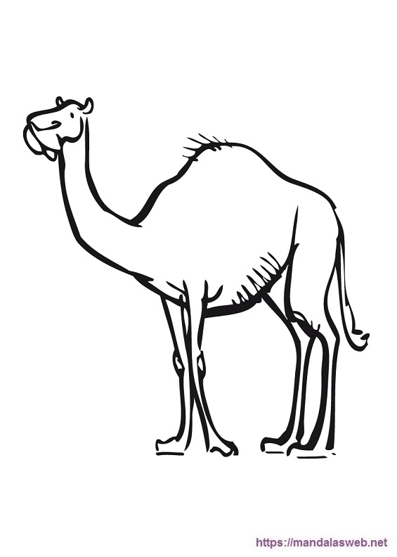 Dibujos de camellos para colorear